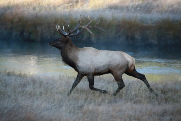 Tiara snapped this awesome photo of a Bull Elk